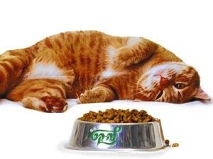 Что любит кушать кошка